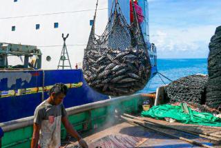 Kiribati — Controlling transhipments in port; source: Francisco Blaha.